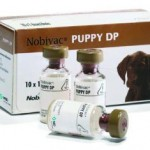 Nobivac Puppy DP